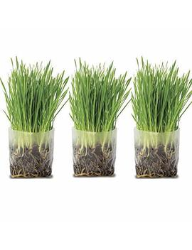 Pop Up Cat Grass Kit (3 Pack) – Just Add Water And Seed. The Perfect Size Snack Your Pets Will Love. Includes Organic Non Gmo Wheatgrass Seed And Fiber Soil In A Bag. Easy Growing, Store And Serve. by Window Garden